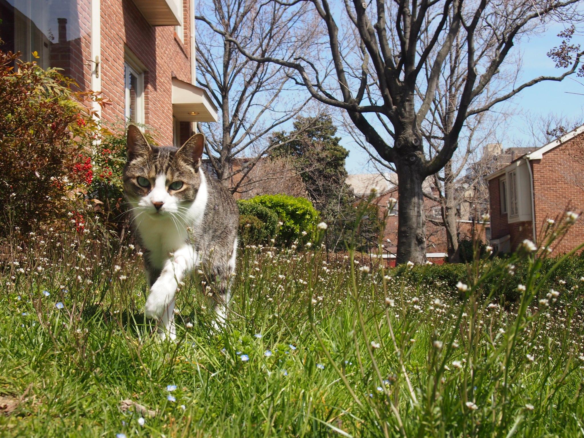 Jasper in the great outdoors (Credit: David Grimm)