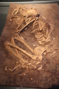 Ancient burial of woman and dog. (Credit: Gary Todd from Xinzheng, China)