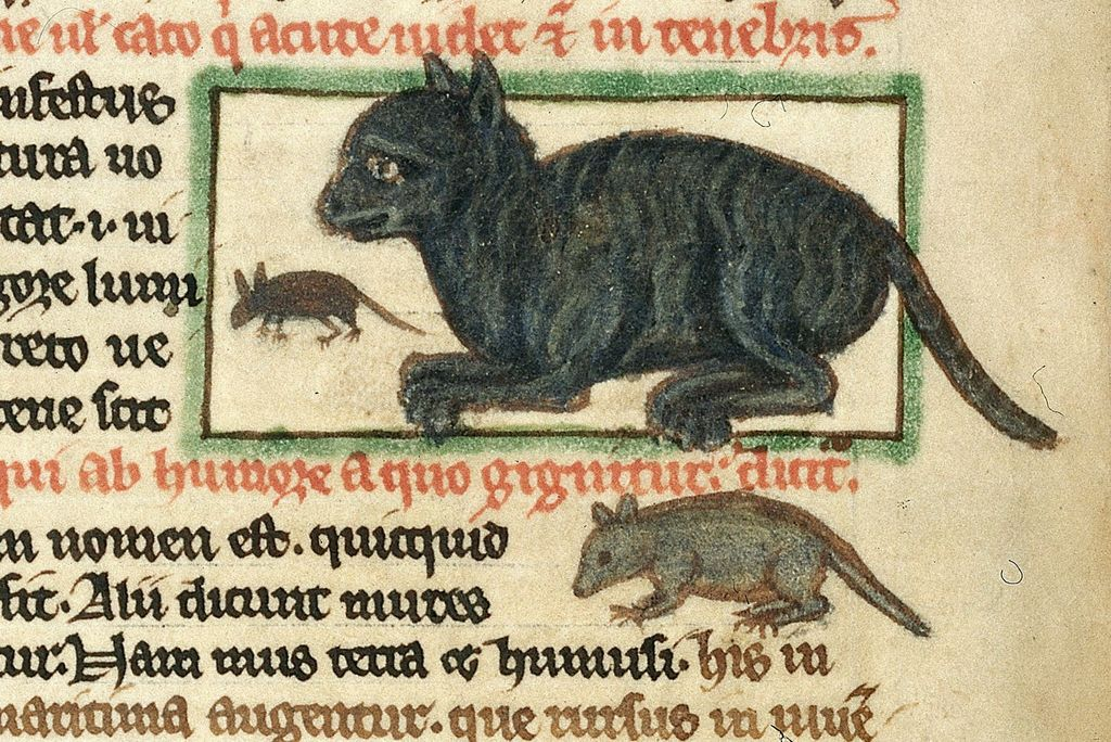 cat-and-mouse-from-bl-harley-3244-f-49v-e79efa